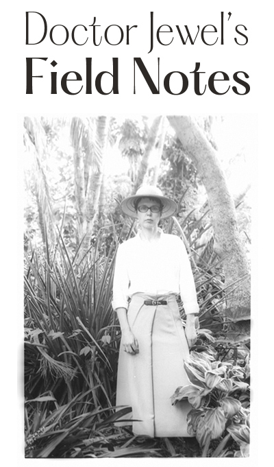 Sheridan Kennedy's Field Notes blog. Click here to return to archive page.