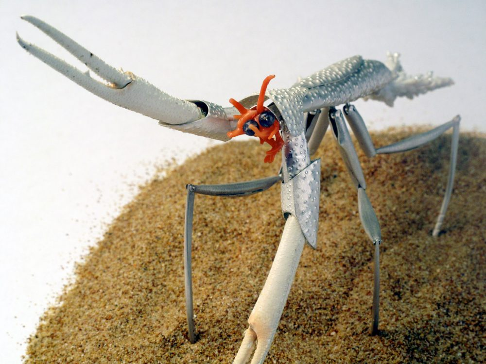 The Coral Mantis is a lab-bred hybrid